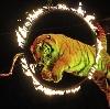 Цирки в Славянке