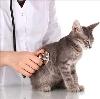 Ветеринарные клиники в Славянке